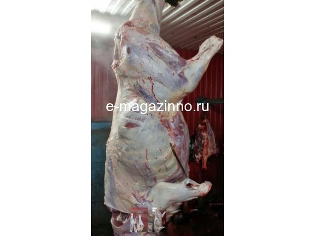 Мясо-говядина порода СИММЕНТАЛЬСКАЯ в полутушах - 2