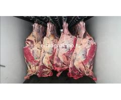 Мясо-говядина порода СИММЕНТАЛЬСКАЯ в полутушах - Изображение 3